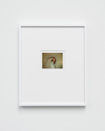 Polaroids 1972–2021: Walter Pfeiffer at Galerie Gregor Staiger